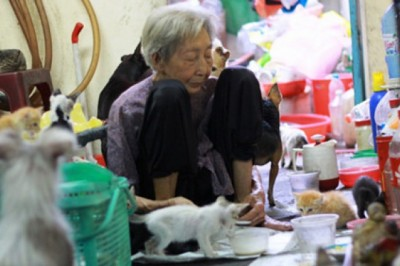 The touching story about The Cat Grandmas in Ho Chi Minh